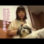 【映像】ペットショップでマブダチを探す阿澄佳奈さんが可愛すぎるだろこれ!!