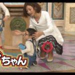 日テレアナウンサー「徳島えりか」が『行列のできる法律相談所』で見せたパンチラ画像がコチラ