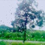河合その子  雨の木